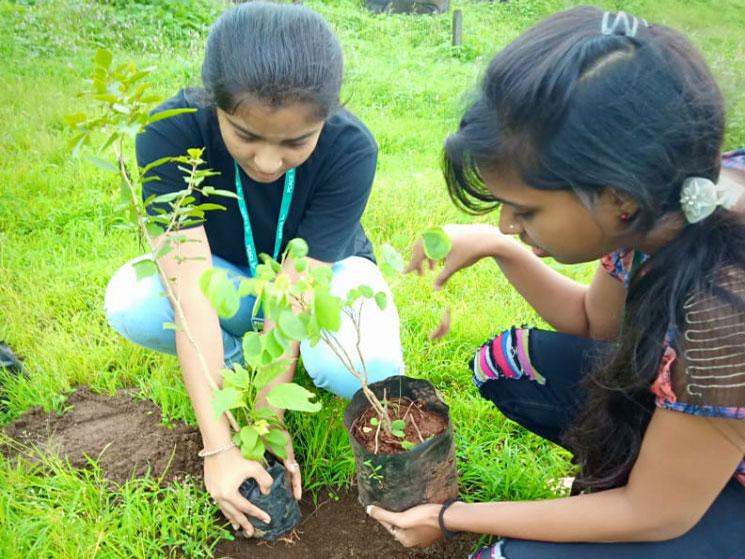 tree-plantation (3)